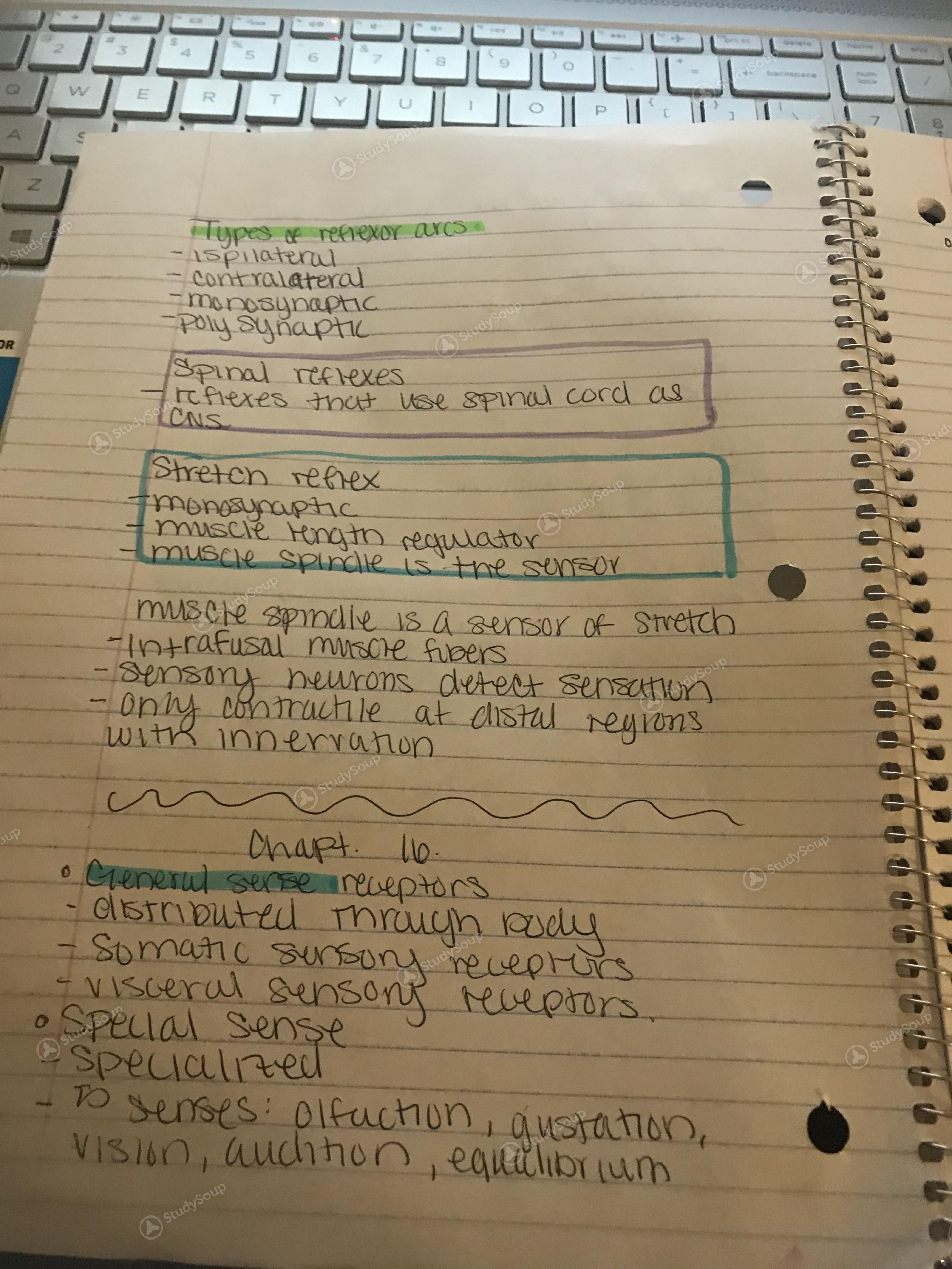 GSU - BIOL 2110 - anatomy exam 3 notes - Study Guide   StudySoup