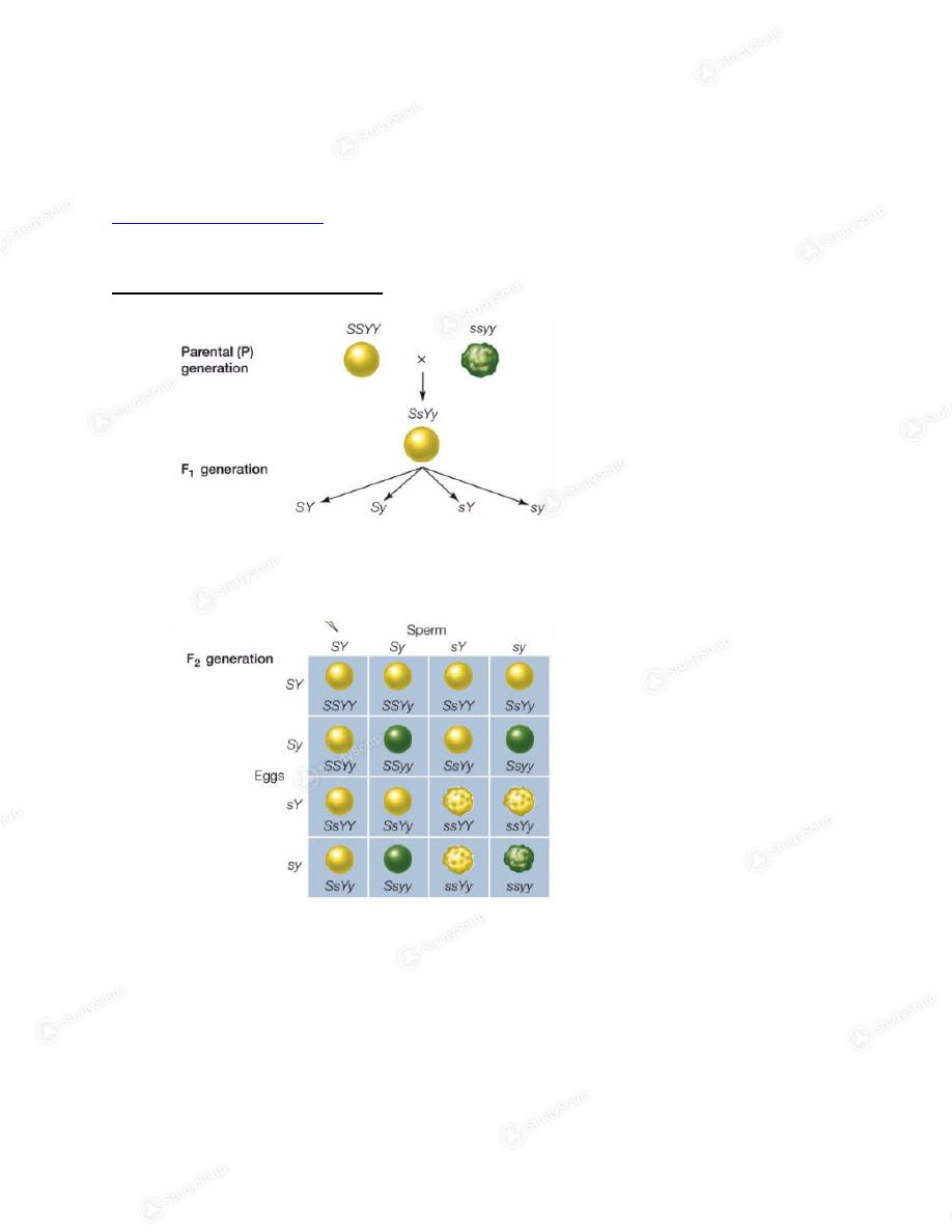 UCD - BIS 2 - BIS 2B- Schmitt + Schreiber- Midterm 2 Study Guide ...