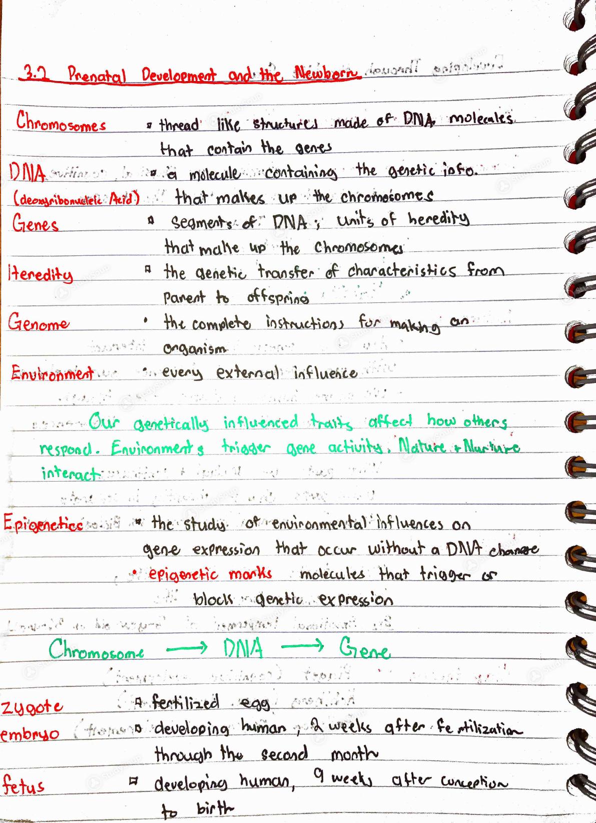GSU - psychology 1101 - Intro to Psychology Chapter 3 Notes - Class