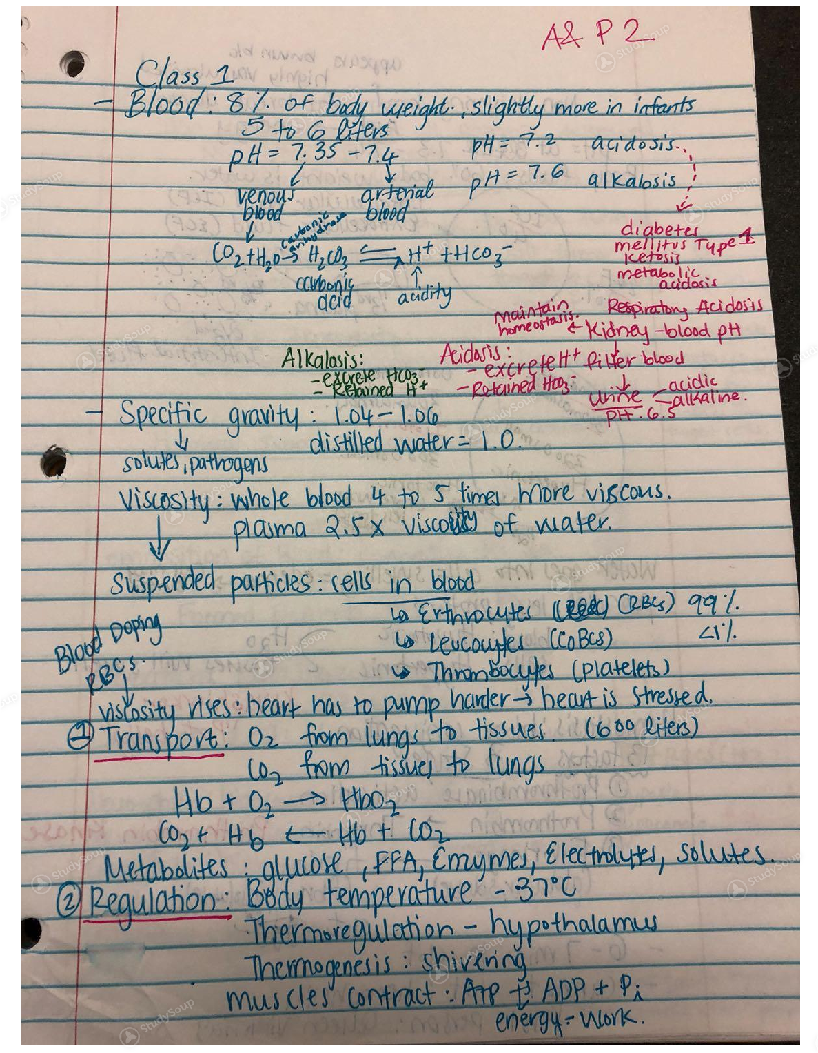 Anatomy And Physiology 2 Midterm Exam Study Guide - Free User Guide •