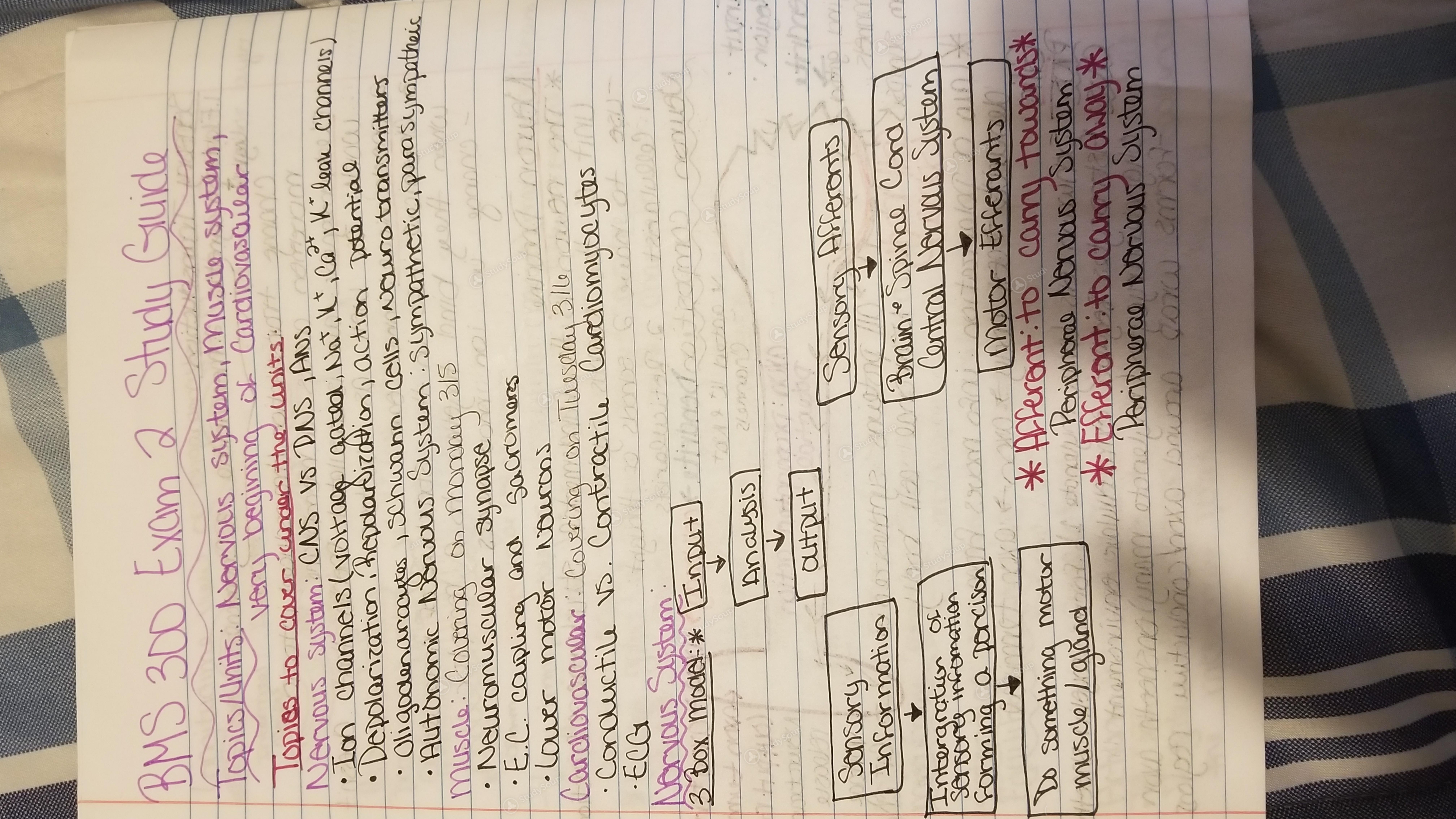 CSU - BMS 300 - BMS 300 Exam 2 Study Guide - Study Guide | StudySoup