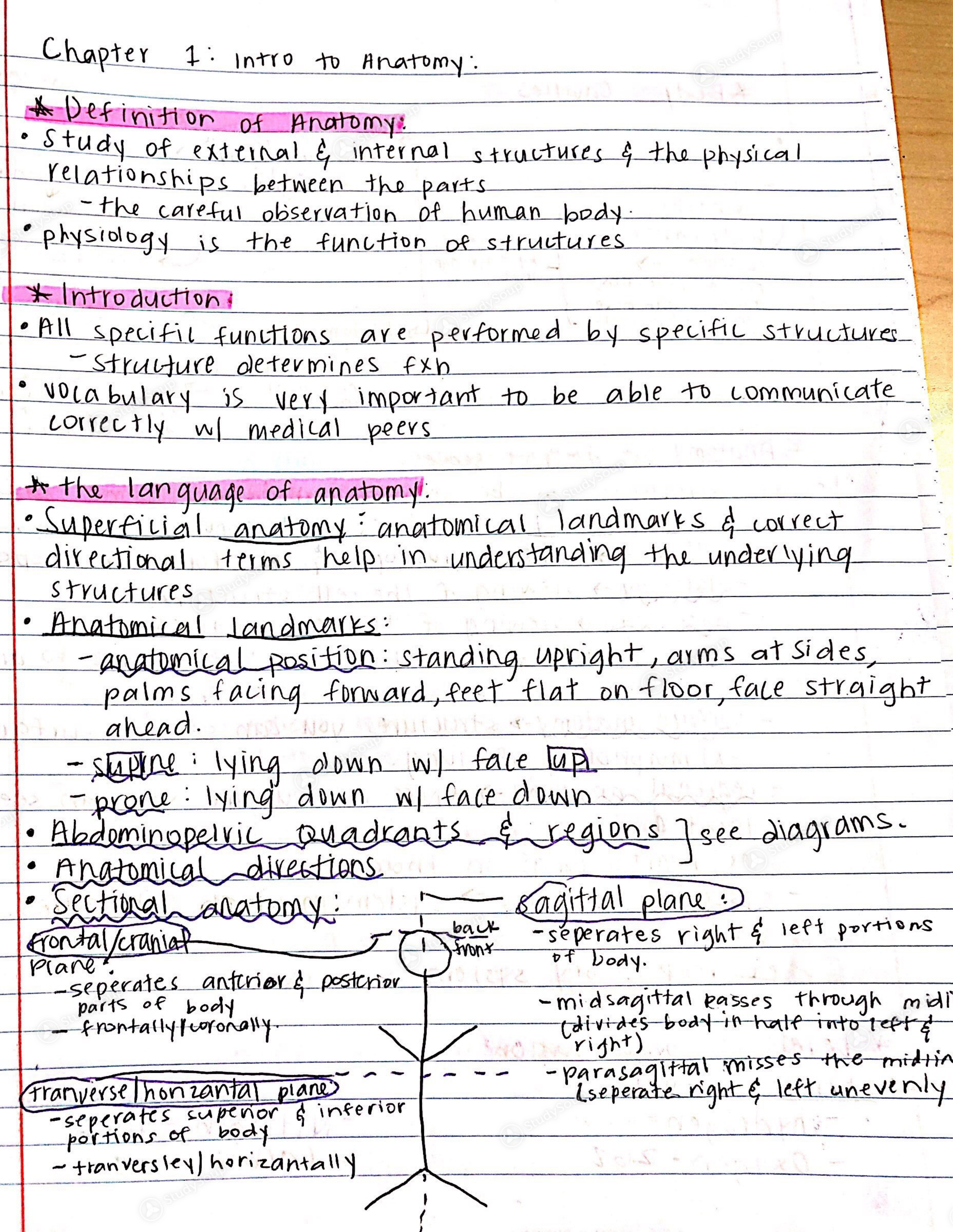 Fiu Zoo 3731 Human Anatomy Ch1 Notes Class Notes Studysoup