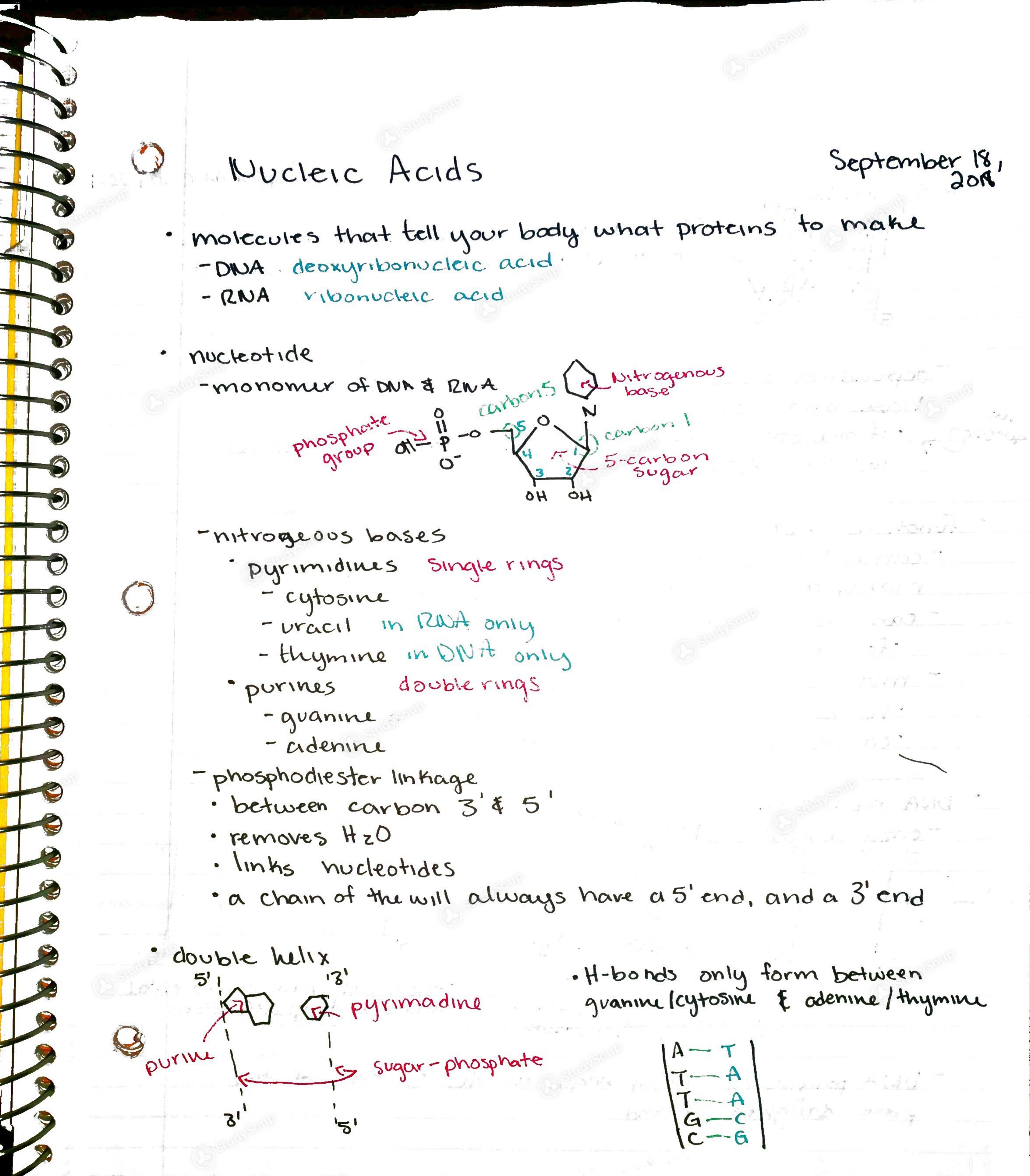 7-studyblue flashcard printing of bio 201 study guide (2015-16.